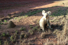 Conservation prioritisation for koalas